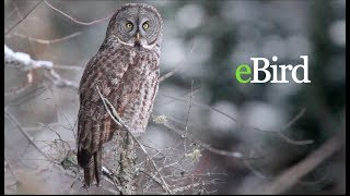 Download Introduction to eBird Video