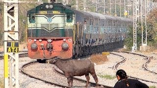 Download Crazy Buffalo STOPS the Train and escapes : Indian Railways Video