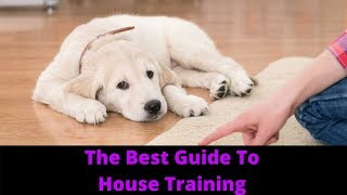 Download How To House Train A Puppy And Potty Train Your Dog Video