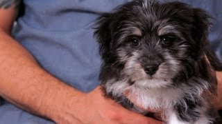 Download How to Teach Your Puppy His Name | Puppy Care Video