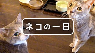 Download ネコの一日 - One day of a Cat - Video