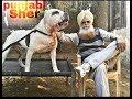 Download Top pitbull punjabiyan da sher is very dangerous Video