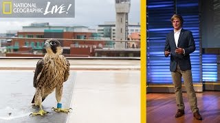 Download Adventures in Photographing England's Urban Wildlife | Nat Geo Live Video