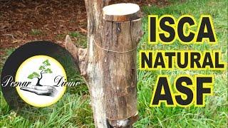 Download Isca natural para captura de abelhas (ASF) Video
