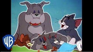 Download Tom y Jerry en Español Latino America | El triángulo de la amistad | WB Kids Video