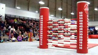 Download K9 Classic High Jumping Video