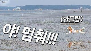 Download 강아지가 엄청난 속도로 갈매기를 쫓아 뛰어가버렸어요.. Video