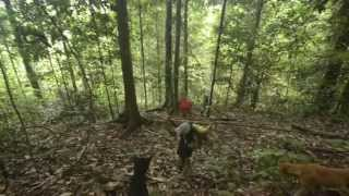 Download Naulu Tribe - The hunter, first trip Video