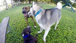Download Day at The Dog Park! Video