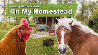 Download Feeding All The Animals On My Homestead Video
