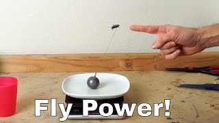 Download How Much Weight Can a Fly Actually Lift? Experiment—I Lassoed a Fly! Video