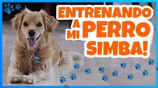 Download Daniel El Travieso - Entrené A Mi Perro Simba! Video