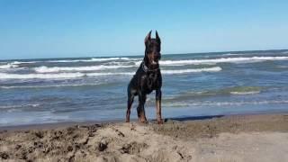 Download Achill ile deniz keyfi :) Video