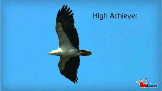 Download The Eagle Leadership Video
