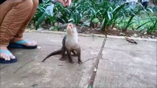 Download otter cute bonding Video