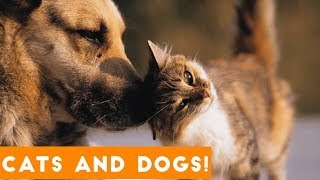 Download Ultimate Cute Cats and Funny Dogs Compilation 2018 | Funny Pet VIdeos Video