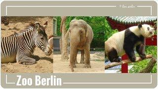 Download Zoo Berlin Video