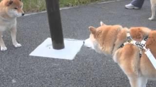 Download 犬の口ケンカ。 Video