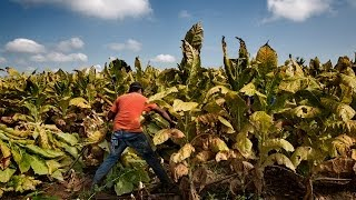 Download MADE IN THE USA: Child Labor & Tobacco Video