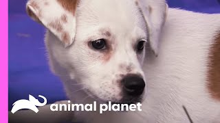 Download Blanco's Sisters Take Over His Private Spot   Too Cute! Video