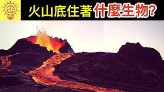 Download 科學家震驚發現!【火山裡住著】的神秘生物 !? Video
