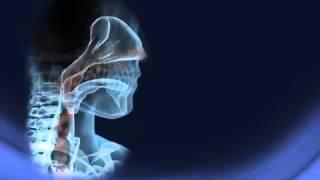 Download Funcionamiento del Sistema Respiratorio Video
