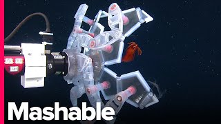 Download There's An Underwater Pokéball That Helps Us Study Delicate Sea Creatures Without Harming Them Video