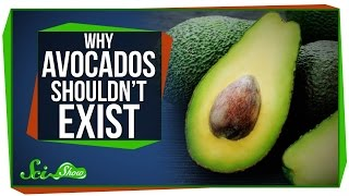 Download Why Avocados Shouldn't Exist Video