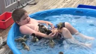 Download ☺ AFV Part 341 - Adorable Pets & Animals (Funny Clips Fail Montage Compilation) Video
