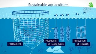Download Ocean Forest - Sustainable aquaculture Video