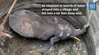 Download Elephant calf rescued in Coimbatore Video