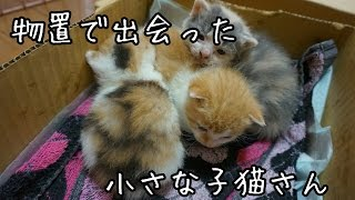 Download 物置で出会った子猫たち 子猫を拾ってみた2017 I picked up a kitten! Video