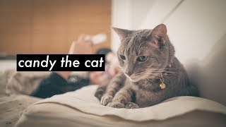 Download MY CAT CANDY Video