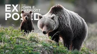 Download EXPOSED Ep. 1: Stop the B.C. Grizzly Trophy Hunt Video