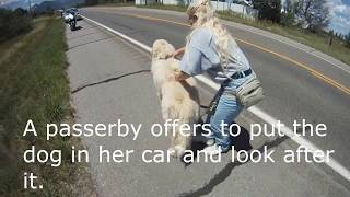 Download Motorcycle Dog Rescue Video