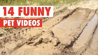 Download 14 Funny Pet Videos Compilation 2017 Video
