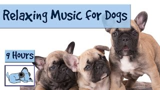 Download Over 9 Hours of Relaxing Music for Dogs! Compilation of Soothing Music for your Pup! 🐶 RMD10 Video