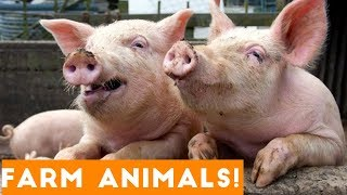Download The Funniest Farm Animals Home Video Bloopers of 2018 Weekly Compilation | Funny Pet Videos Video