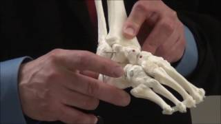 Download Treatment of Clubfoot Demonstration- Large Model Video
