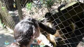 Download Zaigua - Zoológico abandonado Video