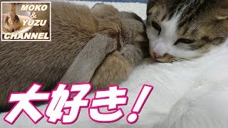 Download 猫の事が大好きなうさぎ(モコ&マロン)Rabbits I love cats Video