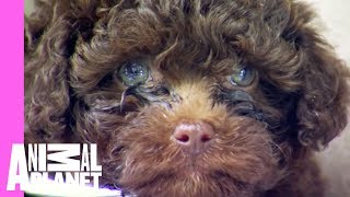 Download Hedgehog and Puppy Bath Time! | Too Cute! Video