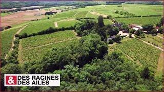 Download Touraine : la viticulture à l'ancienne ! Video