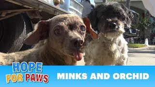 Download Senior dog with a GIANT tumor is dumped on the streets of L.A with her friend. Video