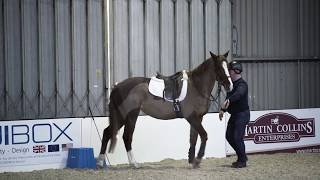 Download Horse refusing to stand at mounting block meets Richard Maxwell | Your Horse Video