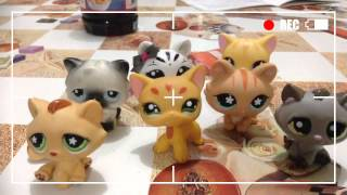 Download Lps cat song Video
