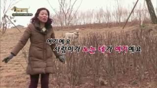 Download 세상에 나쁜 개는 없다 - 악동 리트리버 사랑과 전쟁 #002 Video