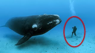 Download Humpback Whale Refused To Leave Diver Alone, Then She Sees Why And Begins To Panic Video