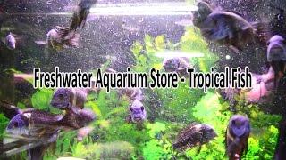 Download Freshwater Aquarium Store - Tropical Fish Video