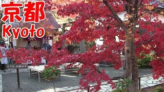 Download 京都観光 Sightseeing in Kyoto Video